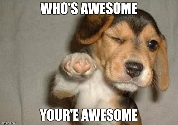 Pointing puppy | WHO'S AWESOME YOUR'E AWESOME | image tagged in pointing puppy | made w/ Imgflip meme maker