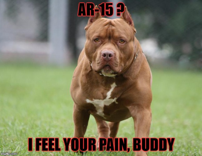 The Pit Bull of Firearms | AR-15 ? I FEEL YOUR PAIN, BUDDY | image tagged in pit bull,ar-15,reputation,mass shootings,dog attack | made w/ Imgflip meme maker