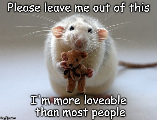 Please leave me out of this I'm more loveable than most people | image tagged in cute,rat | made w/ Imgflip meme maker