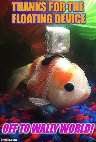 "Someone Fixed this Fish up with a ""Wheelchair"" 
