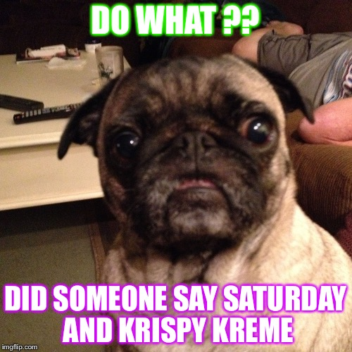 DO WHAT ?? DID SOMEONE SAY SATURDAY AND KRISPY KREME | image tagged in litl dumplin | made w/ Imgflip meme maker