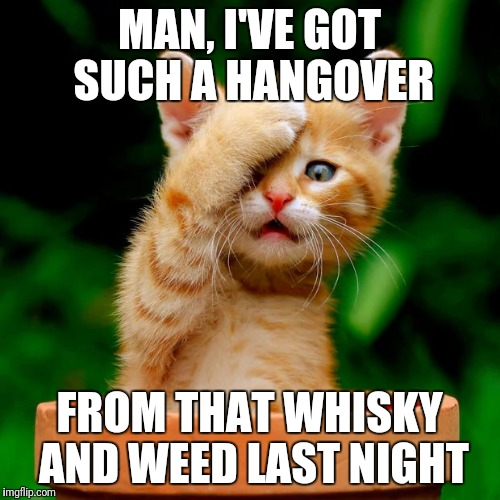 Kitteh is hungover | MAN, I'VE GOT SUCH A HANGOVER FROM THAT WHISKY AND WEED LAST NIGHT | image tagged in kitten facepalm,hangover | made w/ Imgflip meme maker