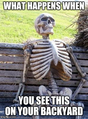Waiting Skeleton Meme | WHAT HAPPENS WHEN YOU SEE THIS ON YOUR BACKYARD | image tagged in memes,waiting skeleton | made w/ Imgflip meme maker