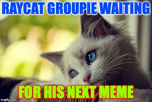 First World Problems Cat | RAYCAT GROUPIE WAITING FOR HIS NEXT MEME | image tagged in memes,first world problems cat,raycat,waiting | made w/ Imgflip meme maker