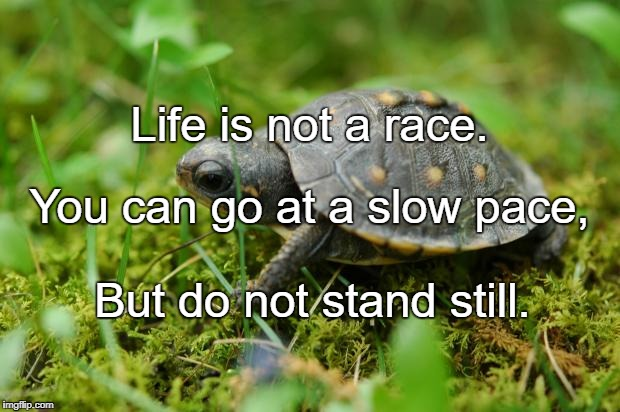 Life is not a race. But do not stand still. You can go at a slow pace, | image tagged in turtle | made w/ Imgflip meme maker