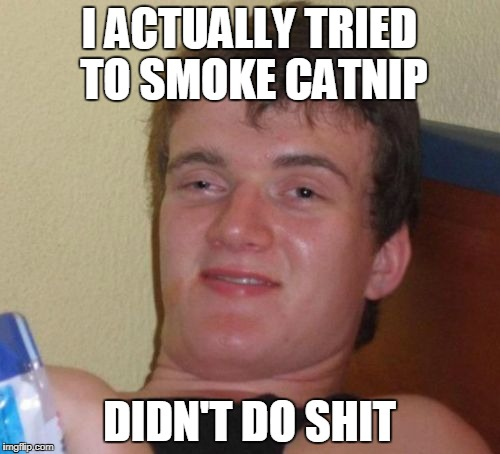 10 Guy Meme | I ACTUALLY TRIED TO SMOKE CATNIP DIDN'T DO SHIT | image tagged in memes,10 guy | made w/ Imgflip meme maker