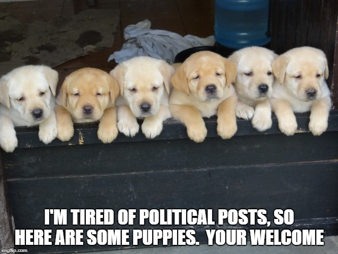 Tired of political posts | I'M TIRED OF POLITICAL POSTS, SO HERE ARE SOME PUPPIES.  YOUR WELCOME | image tagged in cute puppies | made w/ Imgflip meme maker