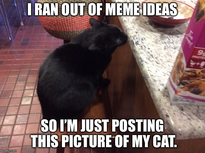 Everybody loves cats! | I RAN OUT OF MEME IDEAS SO I'M JUST POSTING THIS PICTURE OF MY CAT. | image tagged in cats | made w/ Imgflip meme maker