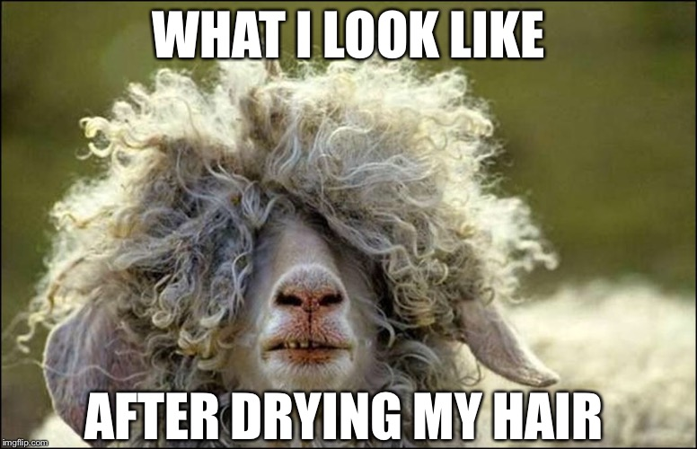 Dried hair | WHAT I LOOK LIKE AFTER DRYING MY HAIR | image tagged in bad hair day,memes | made w/ Imgflip meme maker