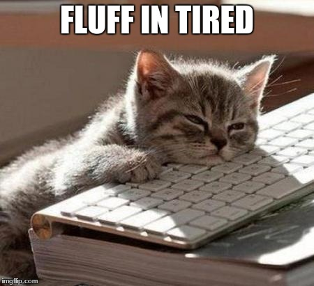 tired cat | FLUFF IN TIRED | image tagged in tired cat | made w/ Imgflip meme maker