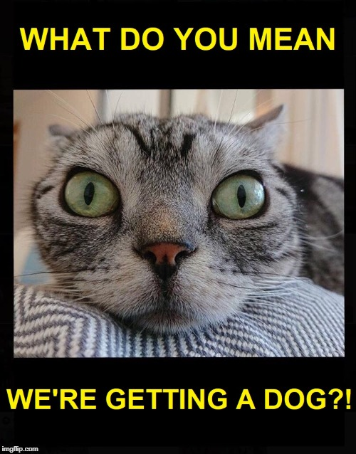 Say What?! | image tagged in cats and dogs living together,cat,dog,cats and dogs | made w/ Imgflip meme maker