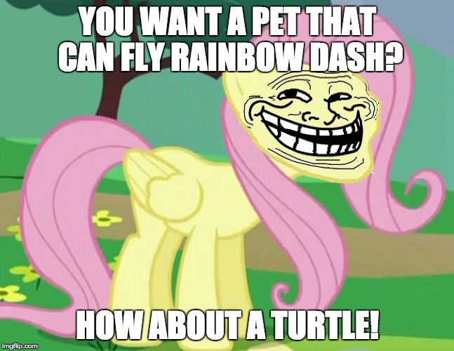 I know she likes tank, but still... | YOU WANT A PET THAT CAN FLY RAINBOW DASH? HOW ABOUT A TURTLE! | image tagged in fluttertroll,memes,rainbow dash,fluttershy,pets | made w/ Imgflip meme maker