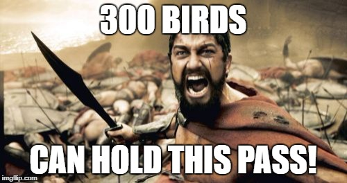 Sparta Leonidas Meme | 300 BIRDS CAN HOLD THIS PASS! | image tagged in memes,sparta leonidas | made w/ Imgflip meme maker