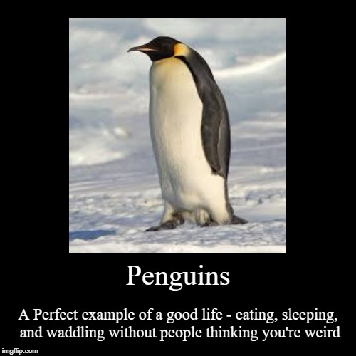 Penguin Life | Penguins | A Perfect example of a good life - eating, sleeping, and waddling without people thinking you're weird | image tagged in funny,demotivationals,penguin,so true | made w/ Imgflip demotivational maker