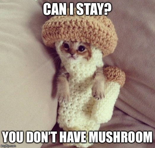 CAN I STAY? YOU DON'T HAVE MUSHROOM | image tagged in memes,mushroom,cat,costume | made w/ Imgflip meme maker