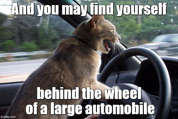 Cat driving once in a lifetime | And you may find yourself behind the wheel of a large automobile | image tagged in memes,cats,excited cat,music,song lyrics | made w/ Imgflip meme maker