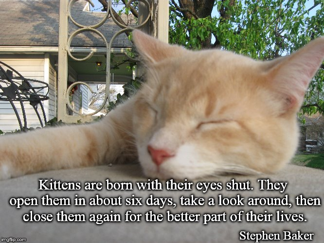 George | Kittens are born with their eyes shut. They open them in about six days, take a look around, then close them again for the better part of th | image tagged in kittens,cats,sleeping,relaxing,relaxed,sleeping cat | made w/ Imgflip meme maker