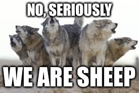 NO, SERIOUSLY WE ARE SHEEP | image tagged in wolf pack | made w/ Imgflip meme maker