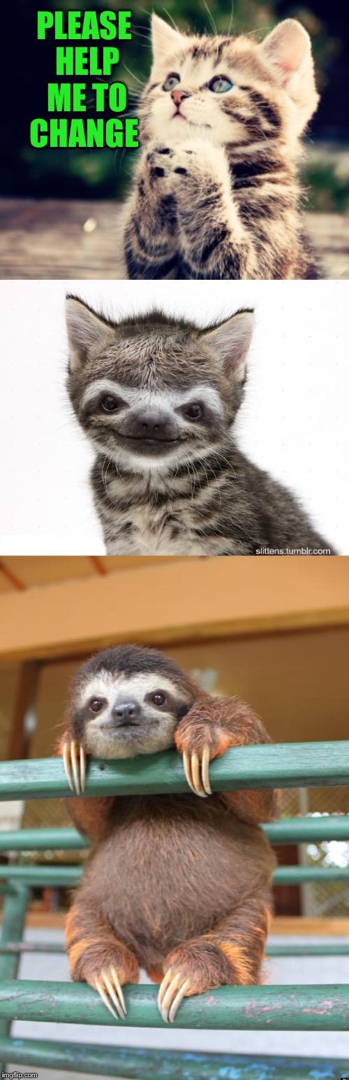 sloth Memes & GIFs - Imgflip