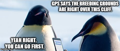 GPS SAYS THE BREEDING GROUNDS ARE RIGHT OVER THIS CLIFF. YEAH RIGHT.  YOU CAN GO FIRST. | made w/ Imgflip meme maker