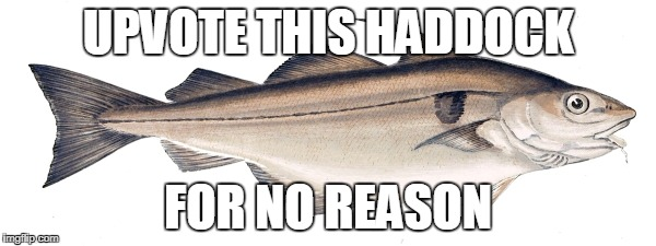 Haddock | UPVOTE THIS HADDOCK FOR NO REASON | image tagged in haddock | made w/ Imgflip meme maker