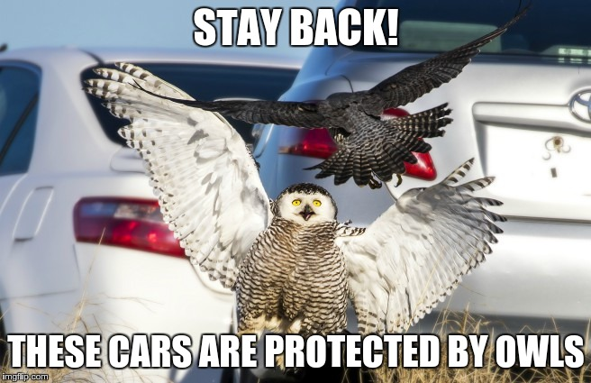 The Owl Zone | STAY BACK! THESE CARS ARE PROTECTED BY OWLS | image tagged in owls,birds,cars,protection,wings | made w/ Imgflip meme maker