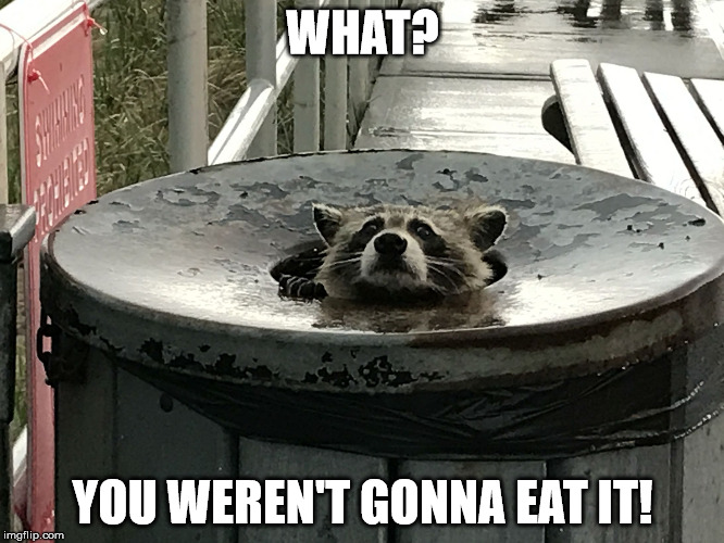 WHAT? YOU WEREN'T GONNA EAT IT! | image tagged in trash panda | made w/ Imgflip meme maker