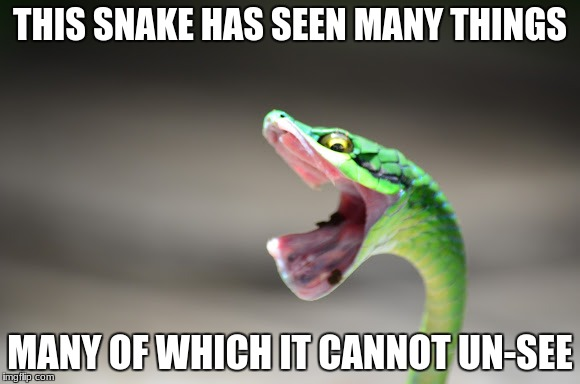 Horrified Snake | THIS SNAKE HAS SEEN MANY THINGS MANY OF WHICH IT CANNOT UN-SEE | image tagged in snake | made w/ Imgflip meme maker