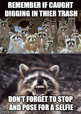 Bandit selfies | REMEMBER IF CAUGHT DIGGING IN THIER TRASH DON'T FORGET TO STOP AND POSE FOR A SELFIE | image tagged in selfie,racoon,meme,funny,trash,madonna strike a pose | made w/ Imgflip meme maker