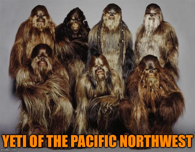 Wookies, Star Wars, Forest World Problems | YETI OF THE PACIFIC NORTHWEST | image tagged in wookies,star wars,forest world problems | made w/ Imgflip meme maker