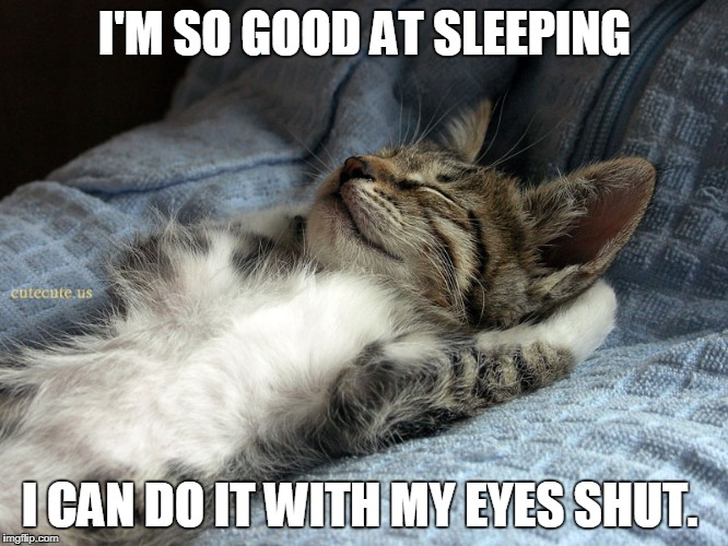 sleeping cat | I'M SO GOOD AT SLEEPING I CAN DO IT WITH MY EYES SHUT. | image tagged in sleeping cat | made w/ Imgflip meme maker