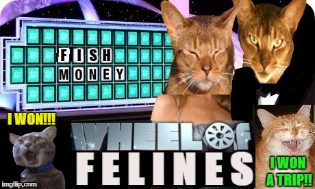 Cat Game show  | I WON A TRIP!! I WON!!! | image tagged in funny memes,cats,wheel of fortune | made w/ Imgflip meme maker