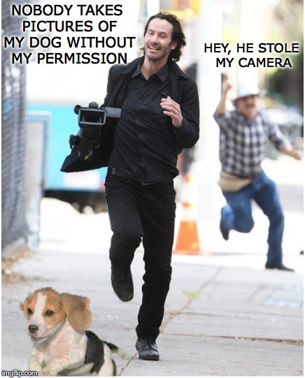 Paparazzi Fail | NOBODY TAKES PICTURES OF MY DOG WITHOUT MY PERMISSION HEY, HE STOLE MY CAMERA | image tagged in keanu reeves,dogs | made w/ Imgflip meme maker