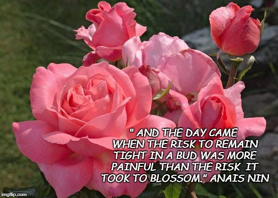 "Roses | "" AND THE DAY CAME WHEN THE RISK TO REMAIN TIGHT IN A BUD WAS MORE PAINFUL THAN THE RISK  IT TOOK TO BLOSSOM."" ANAIS NIN 