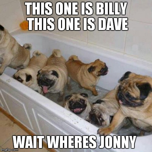 to many pugs | THIS ONE IS BILLY THIS ONE IS DAVE WAIT WHERES JONNY | image tagged in to many pugs | made w/ Imgflip meme maker