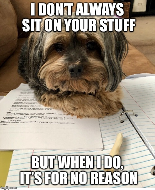Dog memes  | I DON'T ALWAYS SIT ON YOUR STUFF BUT WHEN I DO, IT'S FOR NO REASON | image tagged in dog memes,relatable | made w/ Imgflip meme maker