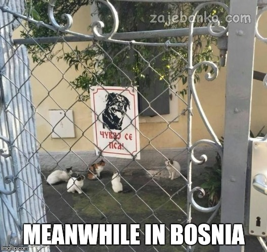 Warning beware of dog | MEANWHILE IN BOSNIA | image tagged in warning sign,dog,dogs,funny signs,cats,backyard | made w/ Imgflip meme maker