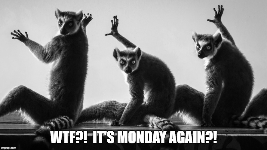 It's Monday again?! | WTF?!  IT'S MONDAY AGAIN?! | image tagged in lemur,lazy,monday,mondays,i hate mondays,look | made w/ Imgflip meme maker