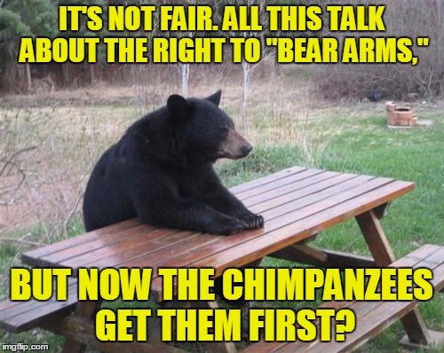 "IT'S NOT FAIR. ALL THIS TALK ABOUT THE RIGHT TO ""BEAR ARMS,"" BUT NOW THE CHIMPANZEES GET THEM FIRST? 