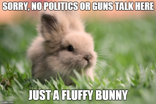 SORRY, NO POLITICS OR GUNS TALK HERE JUST A FLUFFY BUNNY | image tagged in fluffy bunny | made w/ Imgflip meme maker