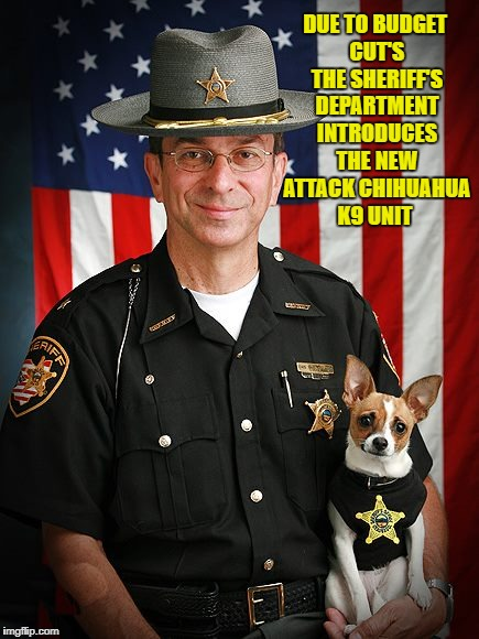 Due to budget cut's the sheriff's department introduces the new attack chihuahua k9 unit | DUE TO BUDGET CUT'S THE SHERIFF'S DEPARTMENT INTRODUCES THE NEW ATTACK CHIHUAHUA K9 UNIT | image tagged in dog | made w/ Imgflip meme maker