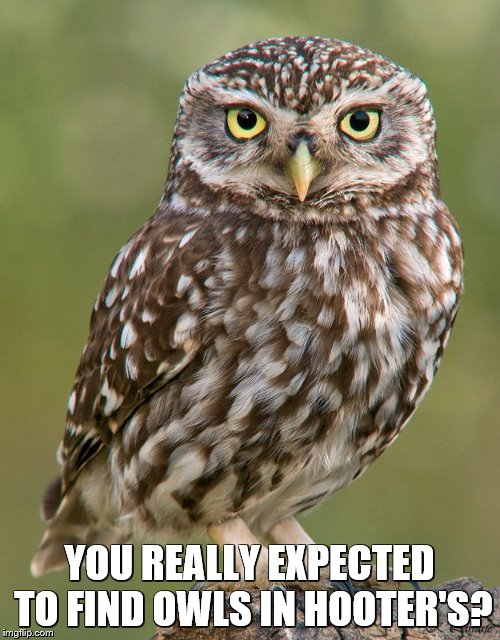 YOU REALLY EXPECTED TO FIND OWLS IN HOOTER'S? | made w/ Imgflip meme maker