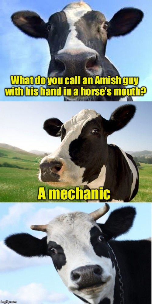 Bad Pun Cow | What do you call an Amish guy with his hand in a horse's mouth? A mechanic | image tagged in bad pun cow,memes,bad pun,bad puns,amish | made w/ Imgflip meme maker