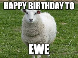 HAPPY BIRTHDAY TO EWE | image tagged in ewe | made w/ Imgflip meme maker
