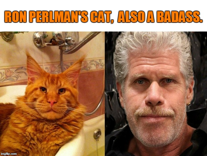 HellPuss |  RON PERLMAN'S CAT,  ALSO A BADASS. | image tagged in cats,ron perlman,cat,totally looks like | made w/ Imgflip meme maker