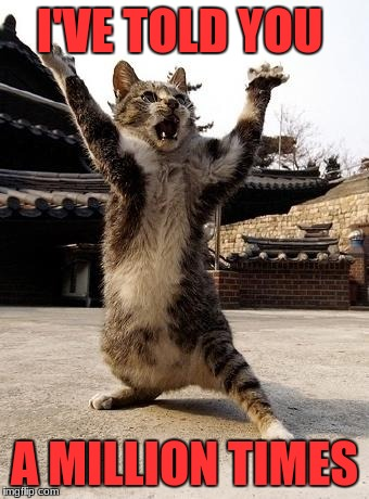 kung fu kitten | I'VE TOLD YOU A MILLION TIMES | image tagged in kung fu kitten | made w/ Imgflip meme maker