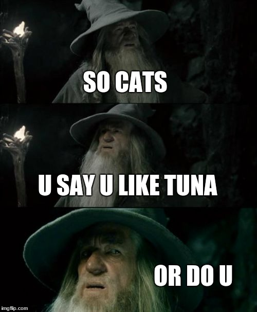 Confused Gandalf Meme | SO CATS U SAY U LIKE TUNA OR DO U | image tagged in memes,confused gandalf | made w/ Imgflip meme maker