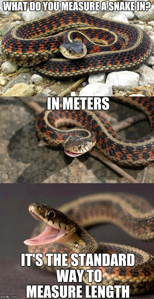 Seriously. Get with it USA... | WHAT DO YOU MEASURE A SNAKE IN? IT'S THE STANDARD WAY TO MEASURE LENGTH IN METERS | image tagged in snake puns | made w/ Imgflip meme maker