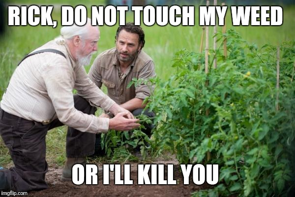 Walking Dead garden | RICK, DO NOT TOUCH MY WEED OR I'LL KILL YOU | image tagged in walking dead garden | made w/ Imgflip meme maker