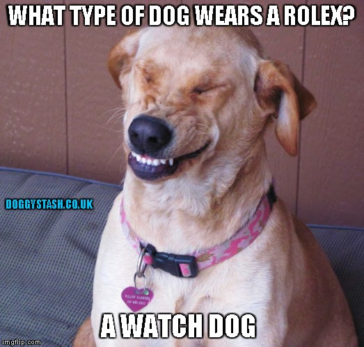 WHAT TYPE OF DOG WEARS A ROLEX? A WATCH DOG | image tagged in laughing dog | made w/ Imgflip meme maker